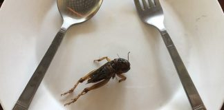 Could Edible Insects be The Next Big Industry for Laos?