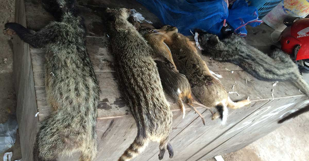End the Wildlife Trade in Laos and Prevent Future Pandemics