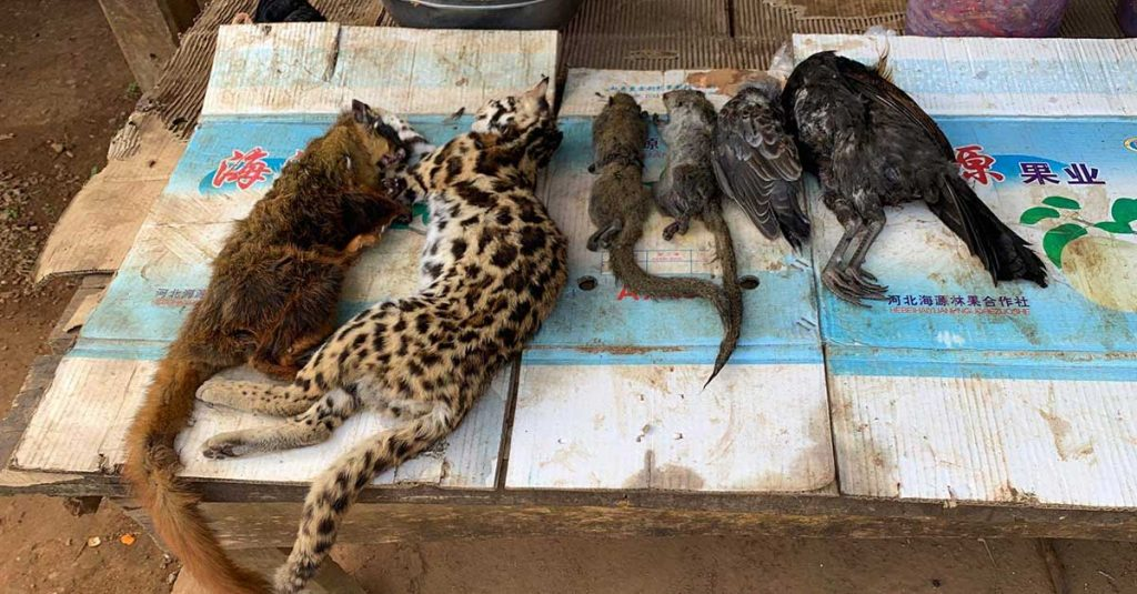 Wildlife for sale at a local market in Laos