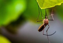 Dengue Fever Cases hit 3,089 in Laos