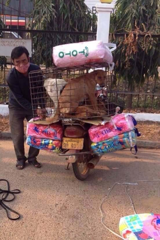 Villagers regularly exchange dogs for blankets with dog meat traders
